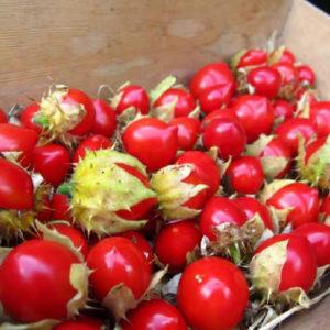 Egrow 15 st / pack Litchi tomatfrön fruktgrönsaksbonsai för trädgårdsväxt