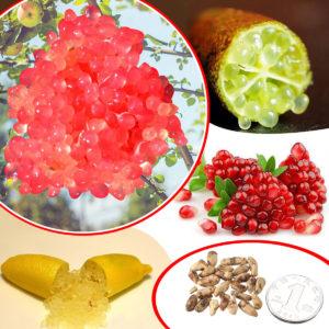 20 STK Ice Pink Finger Fruit Lime Frön Hem Trädgård Balkong Sällsynt Växt