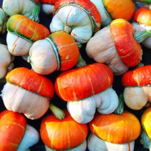 Egrow 5 st / pack mini pumpafrön Cucurbita fruktgrönsak för trädgårdsväxt