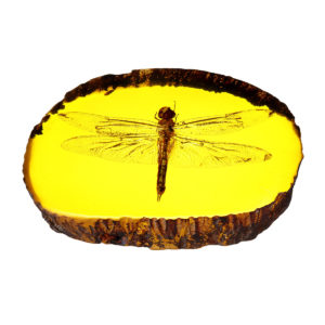 Amber Fossil Insects Dragonfly Manual Polishing Insect Specimens Decorations