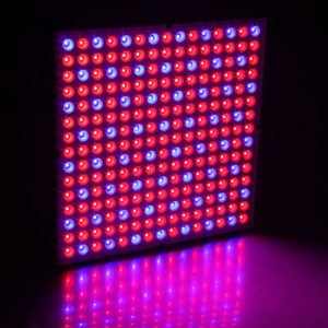 45W 200W Reflector Cup Full Spectrum Led Grow Lights för Grow Tent Box inomhus växthus